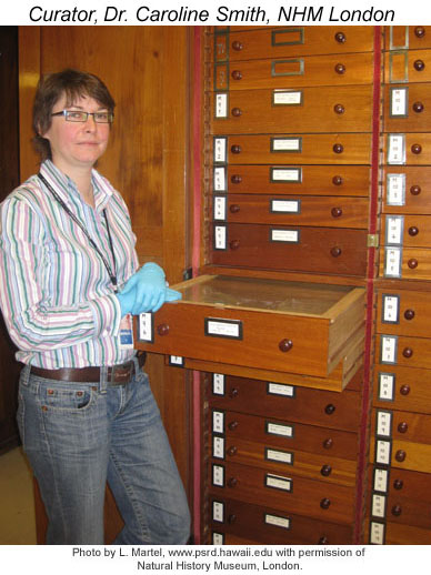 Curator Caroline Smith at the meteorite sample drawers.